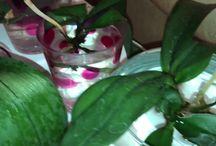orkideler ve çiçekler