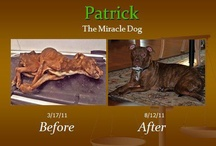 The miracle dog