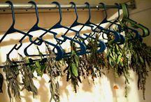 Your own tea garden ideas