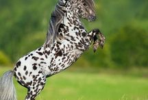 kuce.-ponies