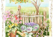 Selene Conti Illustrator 2 / garden Illustrations