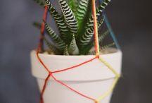 Pflanzen indoor