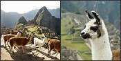 Machu Picchu / Traveling