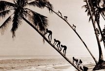 Ceylon / Collection of pictures from yesteryear