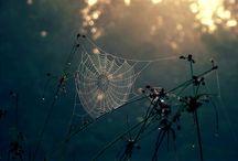 webs / by Maria Belen Scaglia