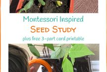 Garden Theme Activities / Discover fun, garden themed learning activities for your kindergarten or Montessori classroom! Use these ideas to create hands-on kids activities! #montessori #kindergarten #handsonactivities