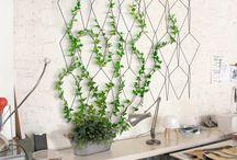 arredo parete con pianta rampicante