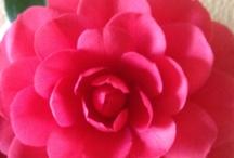 Gardening and Flowers / by Elizabeth Elledge