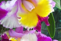ORCHIDS I have or want / lots of beautiful orchids. I grow them here and keep adding to them