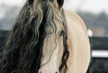 Horses a Plenty / by Rachael Hedrick