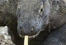 Komodo adventure tours / Adventure tours to discover the island of Komodo dragon Indonesia