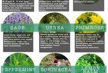 Gardin Medicinal and herb plants