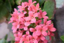 Flores y Plantas / Flores y Plantas