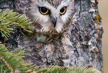 Owls for Inspiration