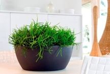 Indoor Planters / Discover a unique selection of Indoor Planters & Containers for decorating your home.