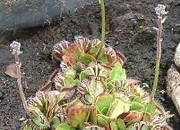 Carnivorous Plants / by Broncati !