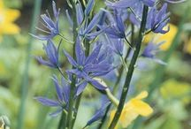 Bulbs for autumn 2015 / Planning already …  / by Tracy Dowling