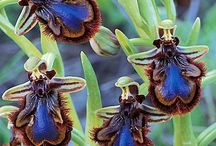 Flowers and Pollinators /