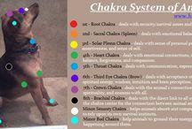 chakra Animal