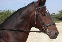 Caballos / El caballo es un animal hermoso