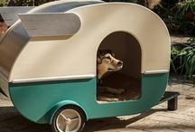 Dog :)