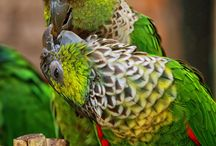 Amazing Parrot Pictures / Collection of great parrot pictures in their natural surroundings.