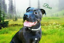 Portraits for Pits / We are offering Portraits For Pits at 15% off at all times. This goes towards any Rescue Organization or person that has adopted a pit bull or pit mix. (American Staffordshire Terrier ) http://debbiespaintedpets.com/portraits-for-pits.html