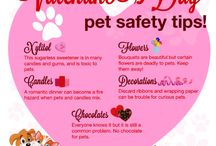 Valentine's Day for Pet Lovers / Love= pets. Get inspiration for celebrating Valentine's Day with your pet.