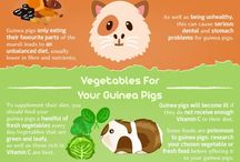 Piggies + Bunnies