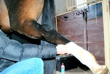 """BLOG - """"THE JOURNEY BACK"""" / Every month or so, we'll share our experience on the journey back from an incredibly freak accident that almost took the life of our stallion with the hope that we may help others with this not-so-common or discussed equine injury, Peroneus Tertius (with a twist of Avulsion...)."""
