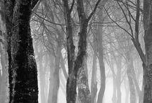 Bäume, Wald, Wurzeln