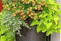 Container gardens / These are plant containers I love to look at, and creat similar for my patio.