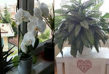 Çiçekler. ..bitkiler. ...