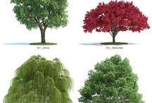Drzewa rastry