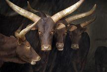 Царство животных / Красота творения, выраженная в потрясающих фотографиях животных