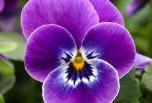 Tipos de Flores / Nesse board você vai conhecer o nome de flores e verá lindas fotos de plantas e flores coloridas para deixar seu lar ainda mais lindo e aconchegante! Aproveite as dicas e inspire-se. #tiposdeflores #fotosdeplantar #florescoloridas #arquiteturaeurbanismo