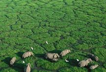 Africa - Travel Destination / Africa travel tips: roadtrips, wildlife spots, national parks and fascinating nature / Afrika Reise Tipps rund um Roadtrips, Tiere, Nationalparks und Natur