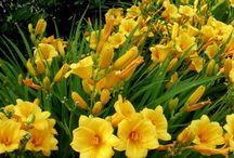 East 8th Sun Loving Perennial Flowers