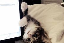 I want a cat again!