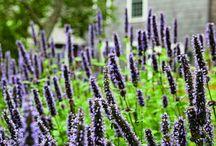 Charlecote plants / Plant recognition