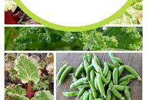 Fast growing veggies