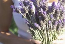 Lavender wedding / inspiration board