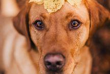 Kostenlose Lightroom Presets für die Hundefotografie