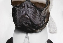 French Bulldogs / by Beckley Boutique