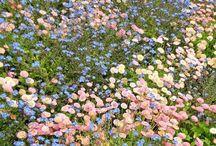 bujo kwiecień 2018 / kwiatki + zielony