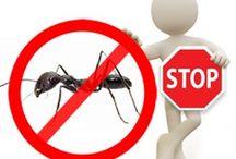 Disinfestazione Formiche / Disinfestazione da formiche di ogni genere e tipologia, in maniera definitiva : http://www.bioecologysrl.it/sevizi_disinfestazione/formiche/disinfestazione_formiche.html