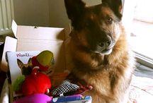 Chats et chiens mignons Merci @cococaline19 pour la photo, son toutou adore sa #wamizbox