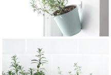 Plants those things I love