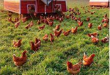 Farm / by Christina Anderson