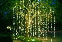 Weide Baum aus Lichter